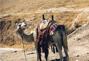 Museo del Libro-desierto de Judea-Massada-Mar Muerto